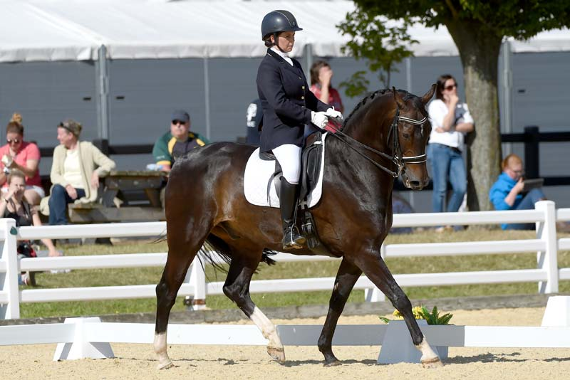 dressage rules trailblazers